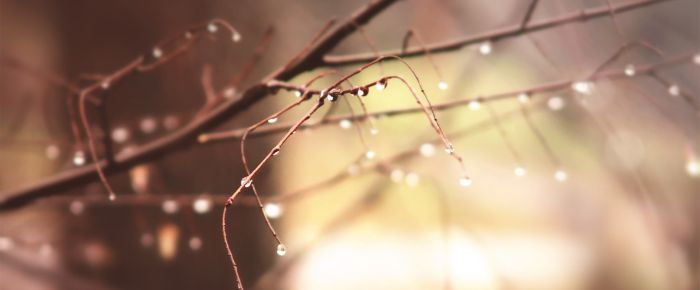 drops-morning-branch-spring-warm-picture-photo